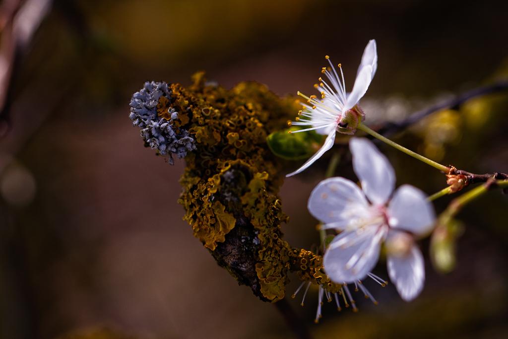 Naturfotografie auf dem Maifeld